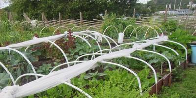 Lärjeåns trädgårdars odlarförening